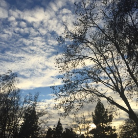Pleasant Hill, CA, 12/14/2015
